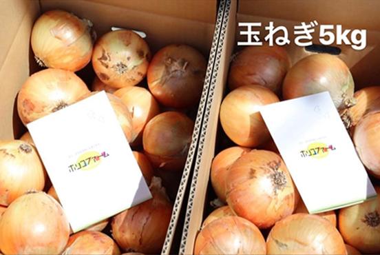 淡路島産玉ねぎ 5kg箱